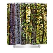 Woodland Morning Shower Curtain