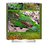 Woodland Mosses Shower Curtain