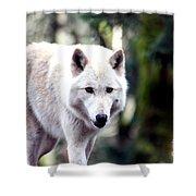 Woodland White Wolf 2 Shower Curtain