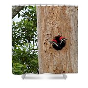 Woodpecker Babies Ready To Explore Shower Curtain