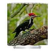 Woodpecker On A Limb Shower Curtain