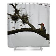 Woodpecker On Lookout Shower Curtain