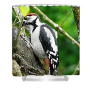 Woodpecker Swallowing A Cherry  Shower Curtain