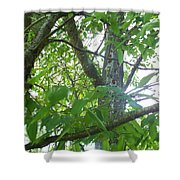 Woodpecker Tree Art Shower Curtain