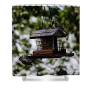 Woodpeckers At Dinner Shower Curtain