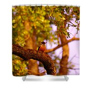 Woodpeckers Of Fort Simcoe Shower Curtain