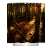 Woods With Pine Cones Shower Curtain by Meirion Matthias