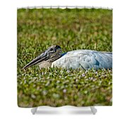 Woodstork Lazing In The Park Shower Curtain