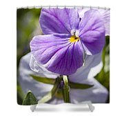 Woodward Pansy Shower Curtain