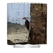 Woody And The Old Birch Shower Curtain