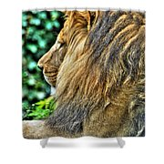 Woolly Mane Of The King   Shower Curtain