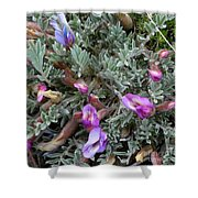 Woolly-pod Locoweed Closeup Shower Curtain