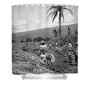 Workers Harvesting Sugar Cane Shower Curtain