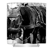Working Horse Shower Curtain