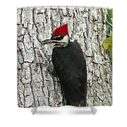 Working Woodpecker Shower Curtain