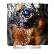 Worried Wiener Shower Curtain