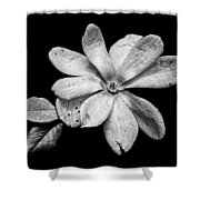Wounded White Magnolia Wide Version Black And White Shower Curtain