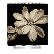 Wounded White Magnolia Wide Version Sepia Shower Curtain