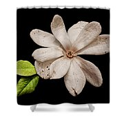 Wounded White Magnolia Wide Version Shower Curtain