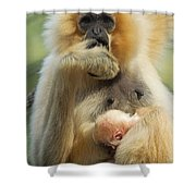 Wow. I Have A Baby Shower Curtain