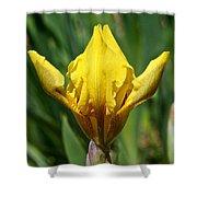 Wow The Dwarf Iris Shower Curtain