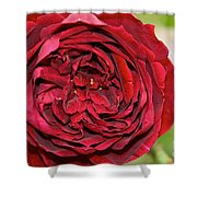 Wrapped Red Shower Curtain