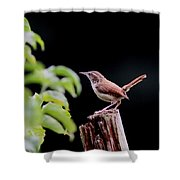 Wren - Carolina Wren - Bird Shower Curtain