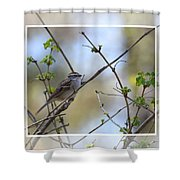 Wren In Spring 2013 Shower Curtain