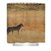 Wylie Coyote Shower Curtain