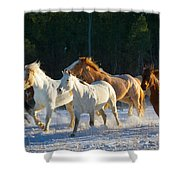 Wyoming Horses Shower Curtain