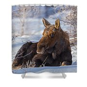 Wyoming Sunbathing Shower Curtain