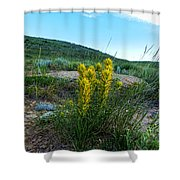 Wyoming Wildflowers Indian Paintflowers Shower Curtain