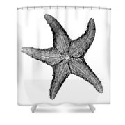 X-ray Of Starfish Shower Curtain