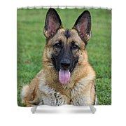 Yahtzee - Beautiful Sable German Shepherd Shower Curtain