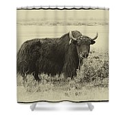 Yaks...the Official Animal Of Tibet Shower Curtain