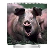 Yawn No I Am Not Ready For Bacon Yet Shower Curtain