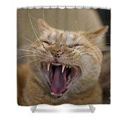 Yawning Cat Shower Curtain