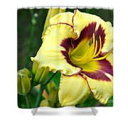Yawning Lily Shower Curtain