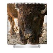 Waco Texas Buffalo Nose Drip Shower Curtain