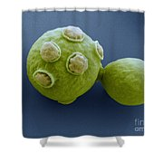Yeast Cells Sem Shower Curtain