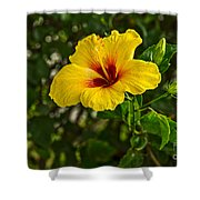 Yellow - Beautiful Hibiscus Flowers In Bloom On The Island Of Maui. Shower Curtain