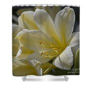 Yellow 8713 Shower Curtain