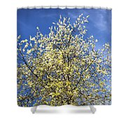 Yellow And Blue - Blooming Tree In Spring Shower Curtain