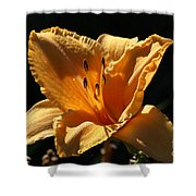 Yellow And Cream Day Lily Shower Curtain