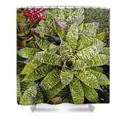 Yellow And Green Bromeliad Shower Curtain