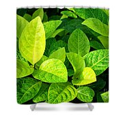 Yellow And Green Leaves Shower Curtain