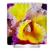 Yellow And Magenta Cattleya Orchid Shower Curtain