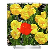 Yellow And One Red Tulip Shower Curtain
