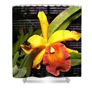 Yellow And Orange Cattleya In The Hothouse Shower Curtain