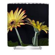 Yellow And Orange Gerbera 2 Shower Curtain